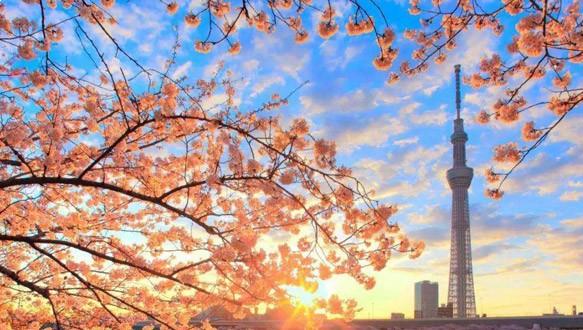 四川大学日本硕士留学预备课程2021年招生简章